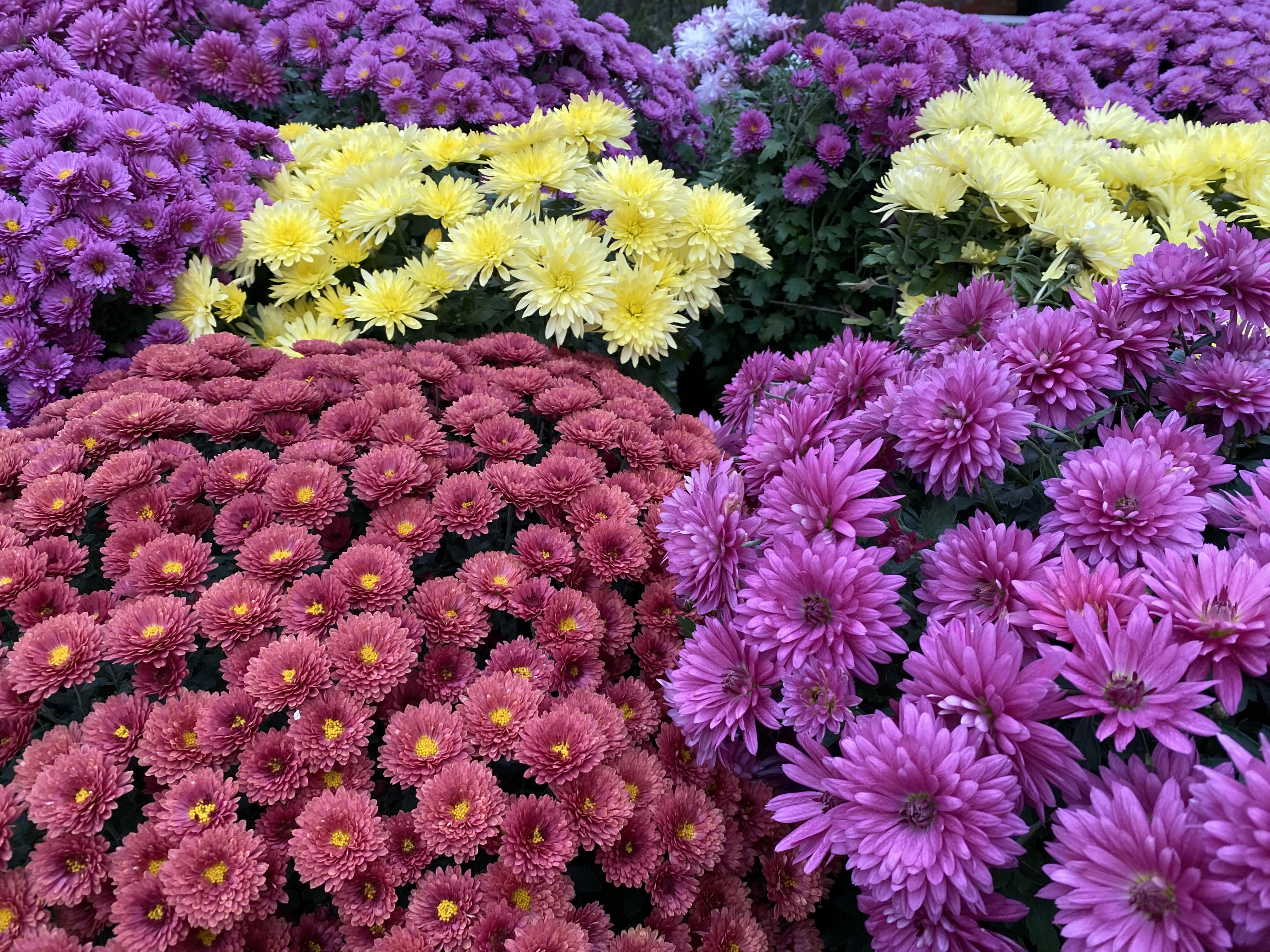 flores винница цветы